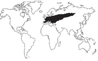Arce europeo. Sicomoro-procedencia